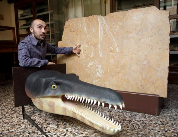A scientist shows the fossilized limestone next to a head model of the prehistoric crocodile. PHOTOGRAPH COURTESY FEDERICO BORELLA