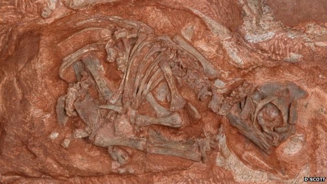 The sites included eggs and even embryonic skeletons of the prosauropods Massospondylus