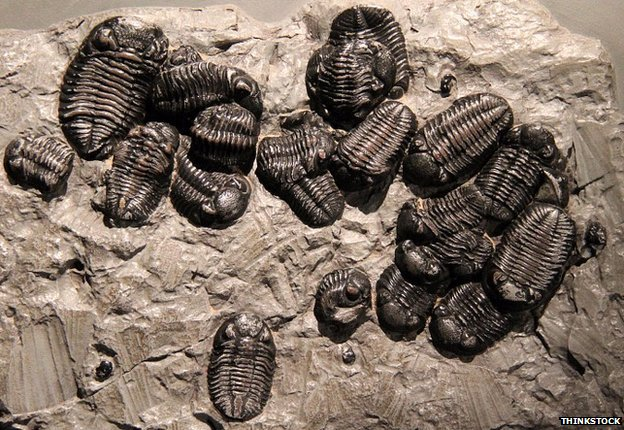 (Image above: Trilobites were among the most numerous inhabitants of Ordovician seas)