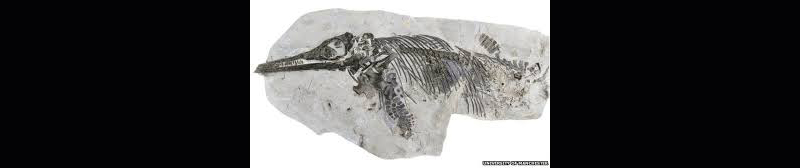 Palaeontologist Dean Lomax explains how what had been believed to be a plaster cast turned out to be a new species of ancient marine reptile