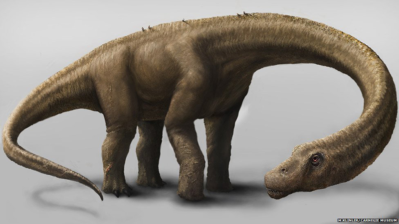 At 26m from head to tail, Dreadnoughtus was longer than two London buses parked end to end